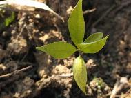 植林4.jpg