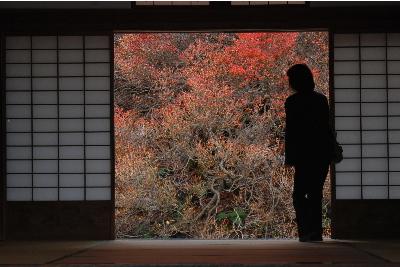 控えめなドウダンツツジの紅葉.jpg