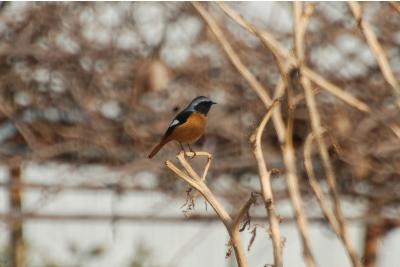 bird22121.jpg