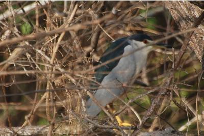 bird2212a.jpg