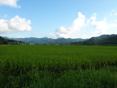 稲の収穫も近い