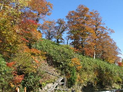 赤茶けた葉が増えてきました1