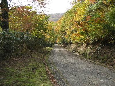 ブナ林のトンネル