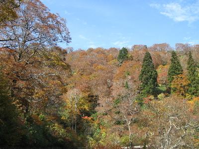 赤茶けた葉が増えてきました3