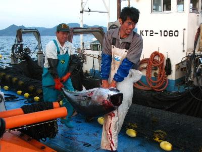 マグロを運ぶ漁師さん