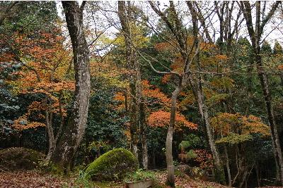 奥山の自然体験村.jpg