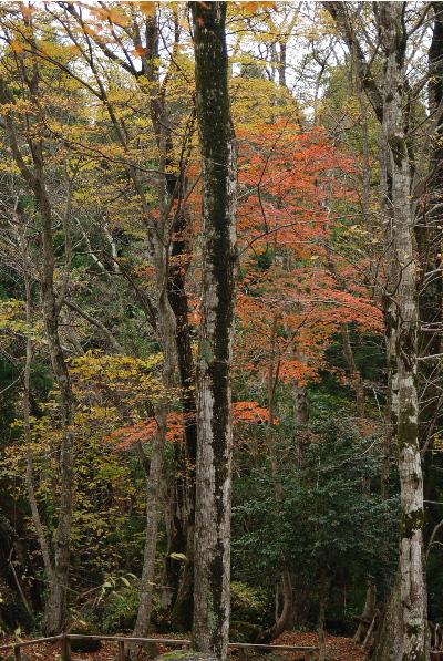 奥山の自然体験村5.jpg
