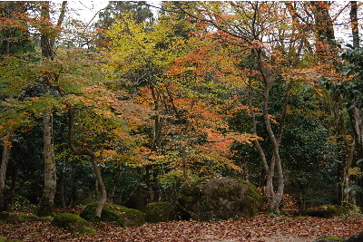 奥山の自然体験村6.jpg