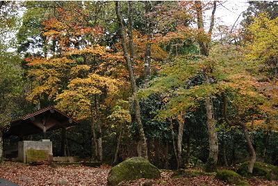 奥山の自然体験村2.jpg