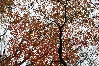 奥山の自然体験村4.jpg