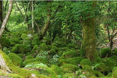苔が密集した岩2