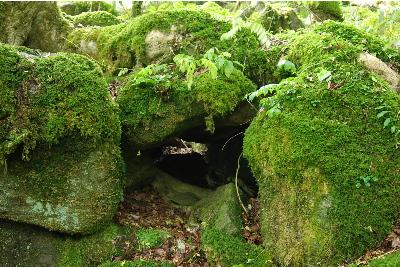 苔が密集した岩4