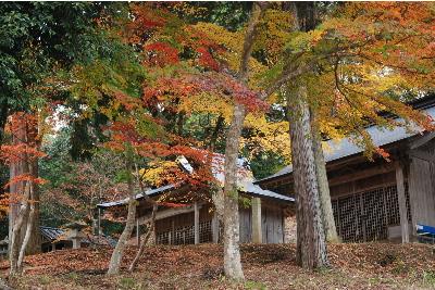 乙女神社の紅葉5.jpg