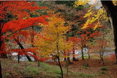 乙女神社の紅葉3.jpg
