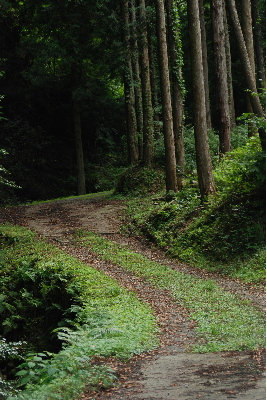 山道をすすみます