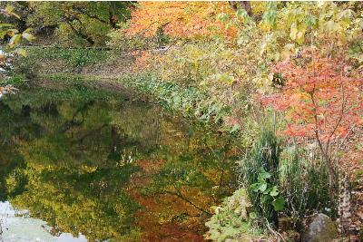 池に映りこんだ、もみじの紅葉2.jpg