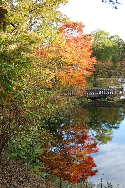 池に映りこんだ、もみじの紅葉.jpg