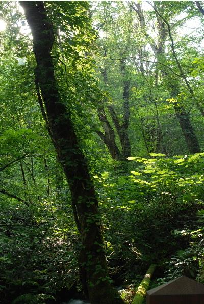 奥深い森の中2