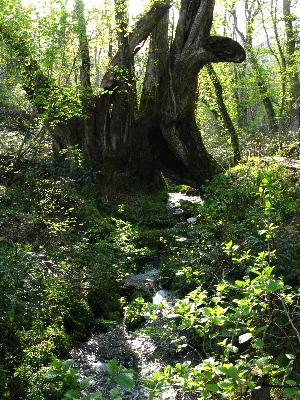 桂の千年水