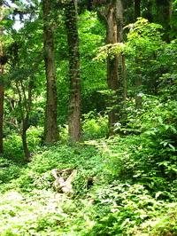 uchiyama21617-1.jpg