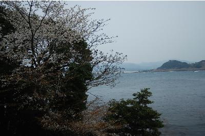 yamazakura22321e.jpg