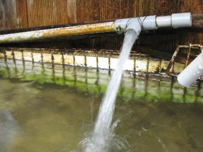 湧き水.jpg