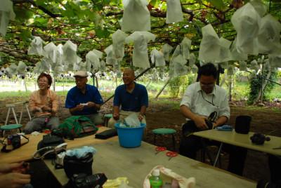 grape23917y.jpg