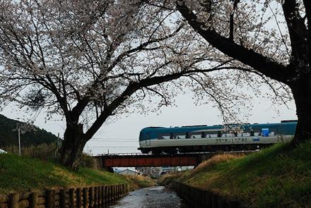h25tochidanisakura2.jpg