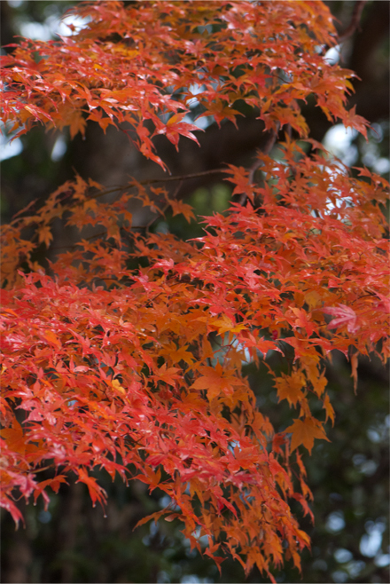 higasiyama25124h.jpg