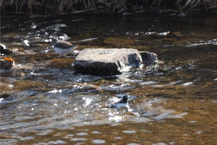 岩目地の川