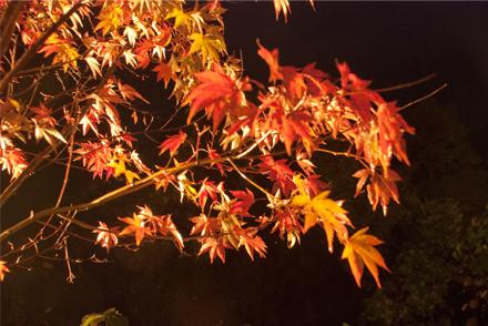 jitokuin251113b.jpg