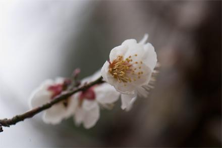 kobunoki26318d.jpg