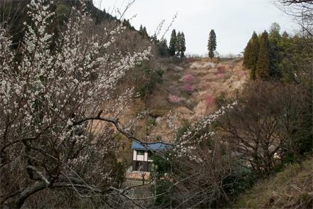 kobunoki26318e.jpg