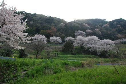 konoshiro24325i.jpg