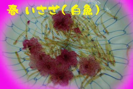 konshin2439b.jpg