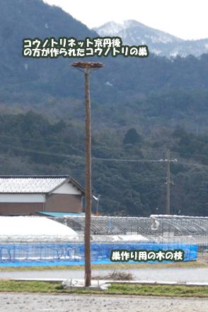 kounotori243915.jpg