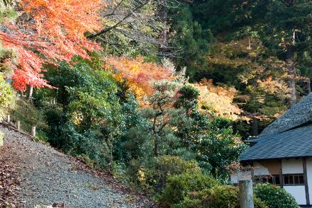 mantokuji2511e.jpg