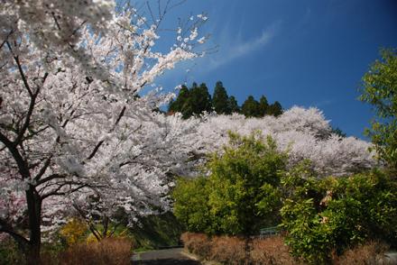 otokoyama24325b.jpg
