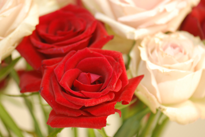 rose22109d.jpg