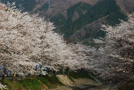 yohoro264a.jpg